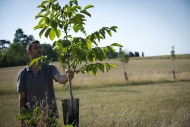 Agroforesterie. Technicien observant un arbre.