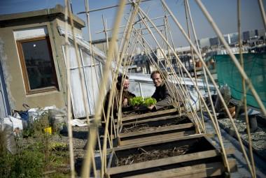 Écologie urbaine. Potager sur les toits.