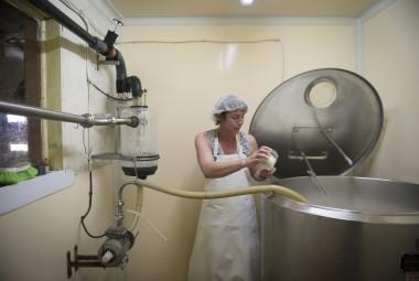 Élevage de brebis laitière de race Lacaune et production de fromage à la ferme.