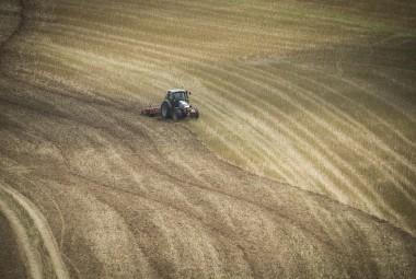 Déchaumage d'un champ de blé.
