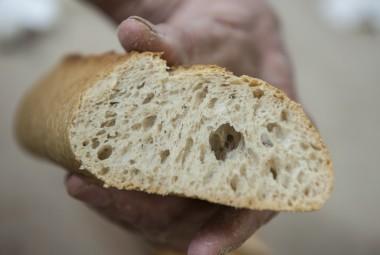 Agriculture Durable : collaboration entre agriculteurs céréaliers bio et artisans boulangers ayant abouti à la baguette Raspaillou. Sa mie est légèrement colorée.