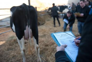 Concours de Jugement des Animaux par les Jeunes, espèce bovine (CJAJ). Jeunes de l'enseignement agricole pendant l'épreuve de pointage d'une Prim'Holstein.