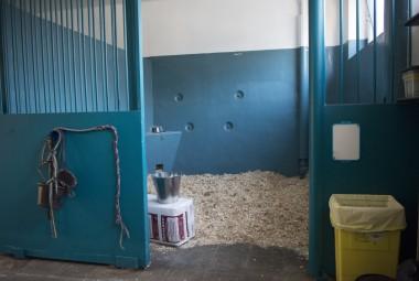 Boxe équin de l'école nationale vétérinaire d'Alfort (ENVA).